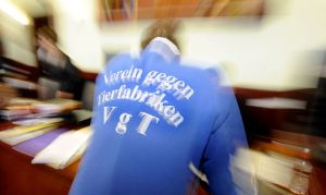 Archivbild: Prozess in Wiener Neustadt / Bild: APA/HERBERT PFARRHOFER